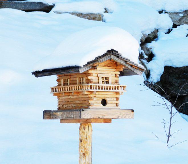 Waarom een vogelhuis in je tuin?